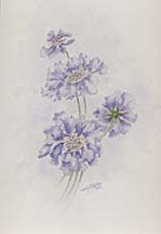 Scabious by Wendy Griffiths